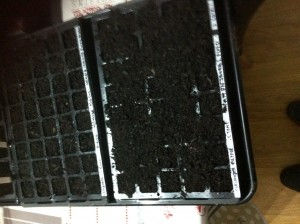 Compost in Tray