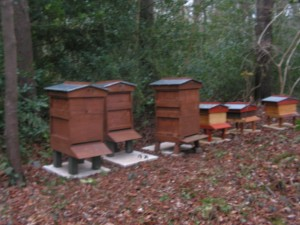 Bee Hives Mar 2016