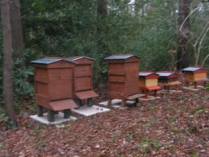 Bee Hives Mar 2016