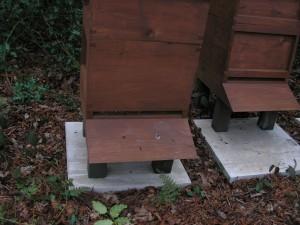Hive 1 Bees Mar 2016