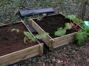 Rhubarb Beds